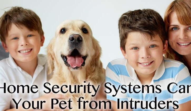 5 Ways Home Security Systems in Harmony Can Protect Your Pet from Intruders